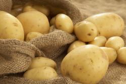 Картофель для лечения кисты в носу