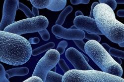 Бактерии - причина появления заболевания
