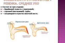 Отличия строения уха ребенка от взрослого