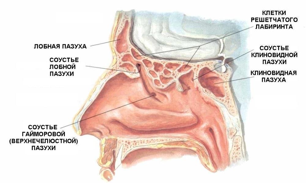 какой врач лечит запах изо рта