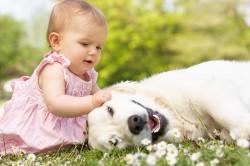 Аллергия на домашних животных - причина ларингита