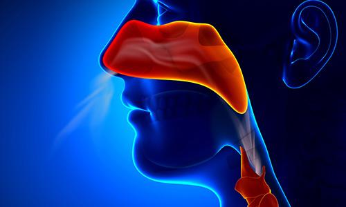 Локализация болезней горла и носа