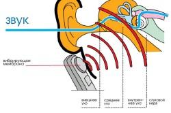 Принцип работы уха