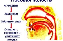 Функции носа